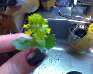 Winter Cress Head