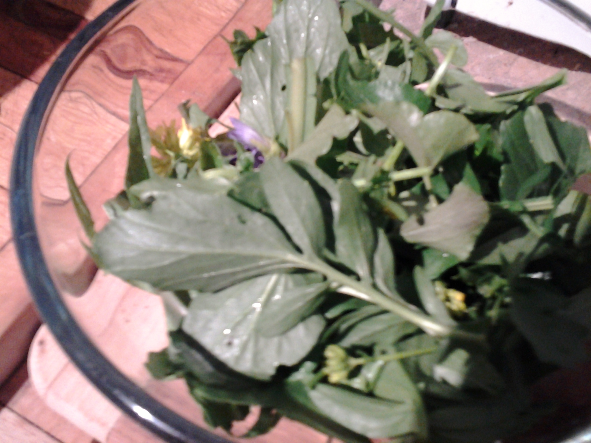 Foraging Fun: Violets, Winter Cress, and Dandelions
